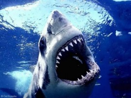I have a ridiculous fear of sharks but I'd jump in the water in a second for an amazing role.